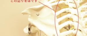 肩甲骨がゴリゴリと音がするならコレで解消!簡単筋膜リリースのやり方とは?