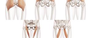 股関節の筋肉の全て|作用や痛みの原因・筋トレ・ストレッチ方法まで