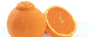 デコポンのカロリーは?ダイエット向き?糖質・脂質・タンパク質比較