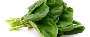 ほうれん草のカロリーは?ダイエット向き?糖質・脂質・タンパク質比較