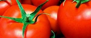 トマトは糖質制限ダイエット向きか?カロリー・糖質・脂質・タンパク量を分析