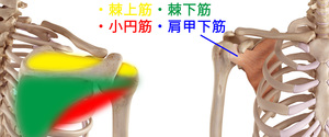 肩のインナーマッスルの作用と鍛え方