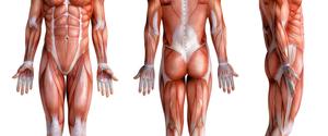 部位別の筋肉の名称を覚えよう!それぞれの鍛え方も解説!