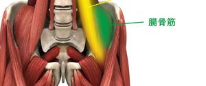 腸腰筋とは?作用から筋トレ・ストレッチ方法まで徹底解説!