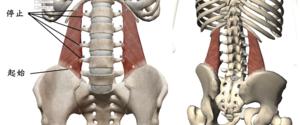 腰方形筋とは?作用から腰痛予防になるストレッチまで紹介