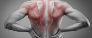 筋肉量を増やすと体脂肪も落ちる!そのメカニズムと方法とは?