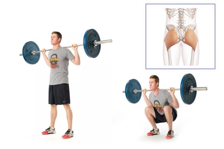 バックスクワットで鍛えられる筋肉