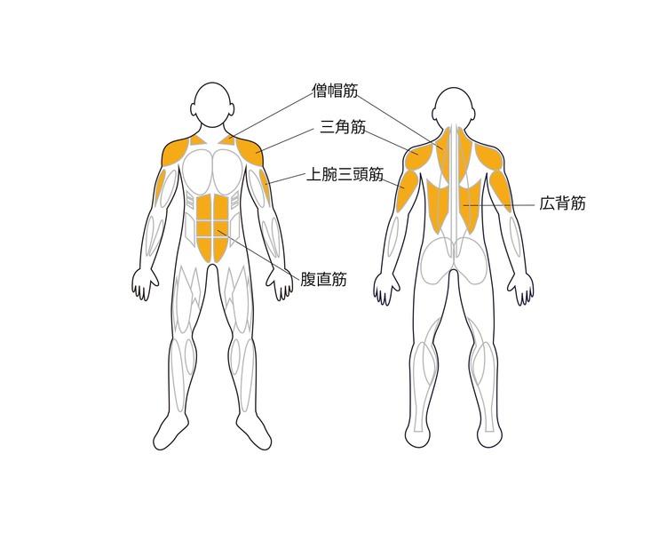 逆立ちで鍛えられる筋肉部位