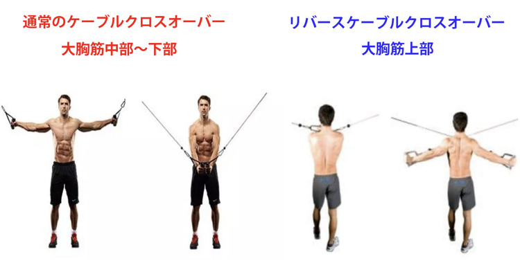 ケーブルクロスオーバーで鍛えられる筋肉
